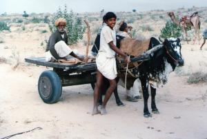 Cattle cart