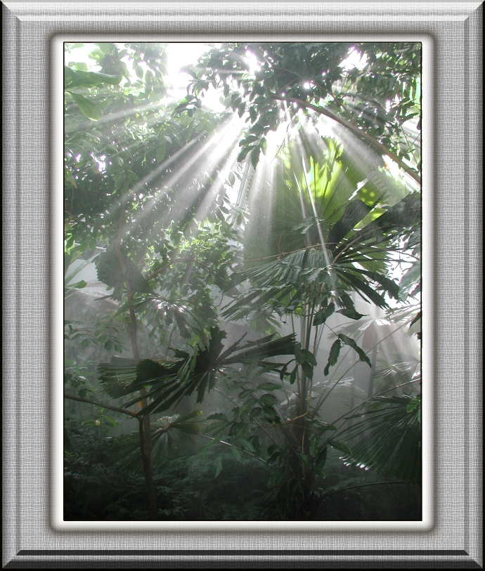 Tropical sunbeams