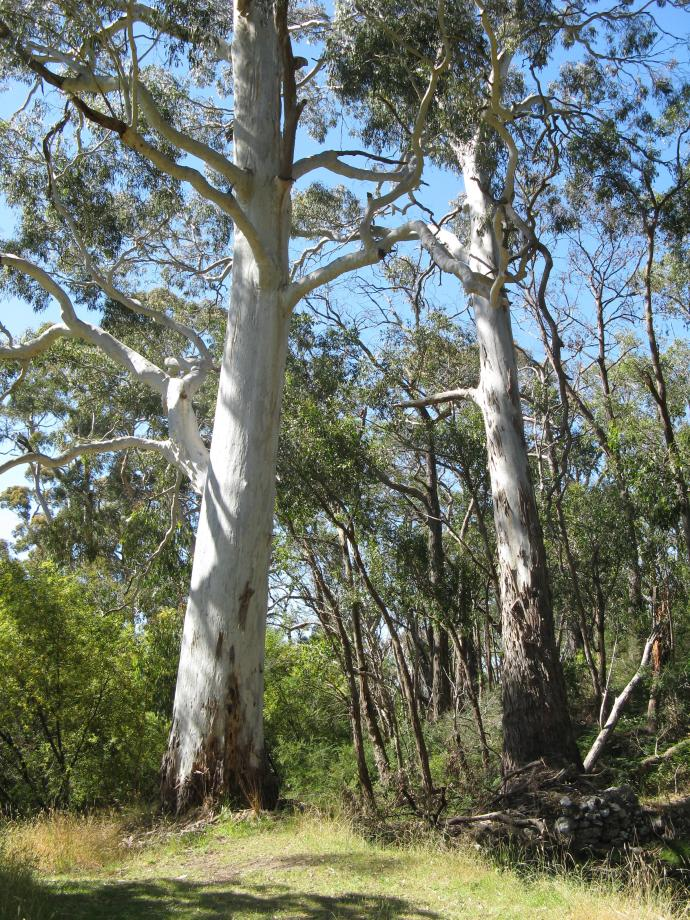 Gums with dappled light playing over them