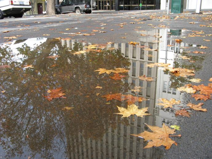 Autumn leaves in puddles