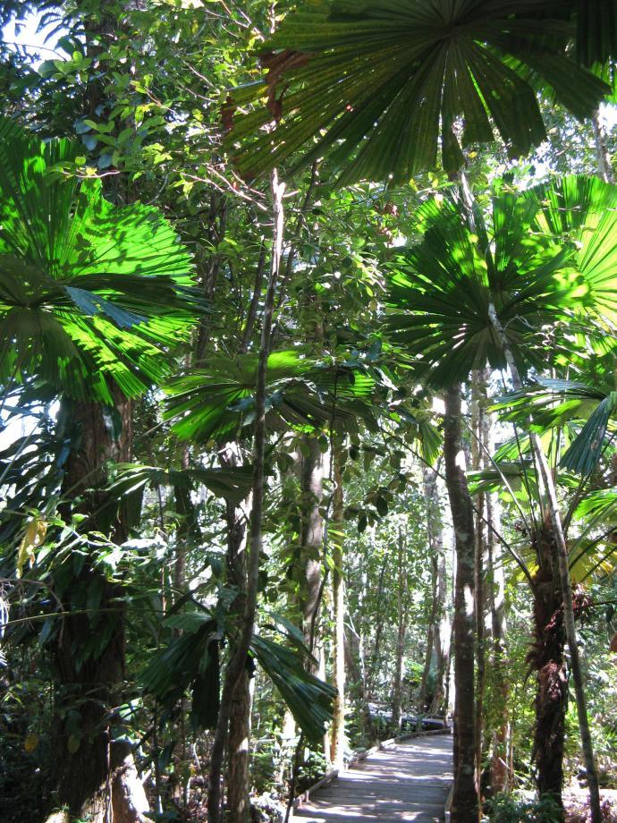 Walking through the rainforest