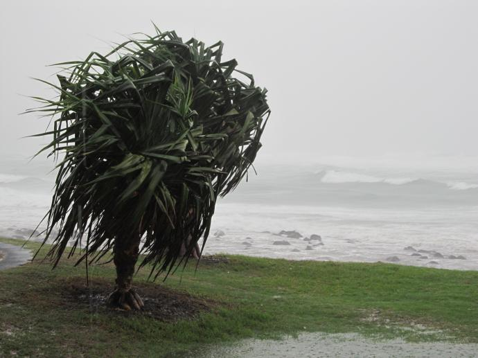 Meanwhile on shore the wind tears at the Pandanus trees