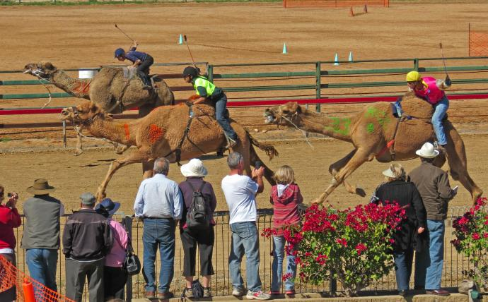 camel races winton pc sx40 015_3443x2140