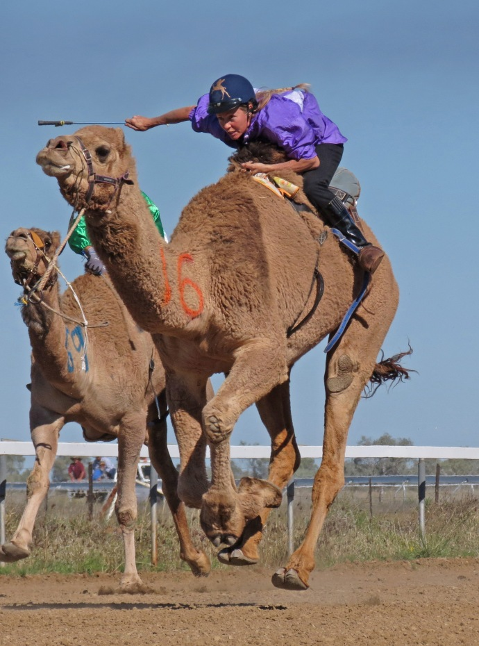camel races winton pc sx40 065 go girl